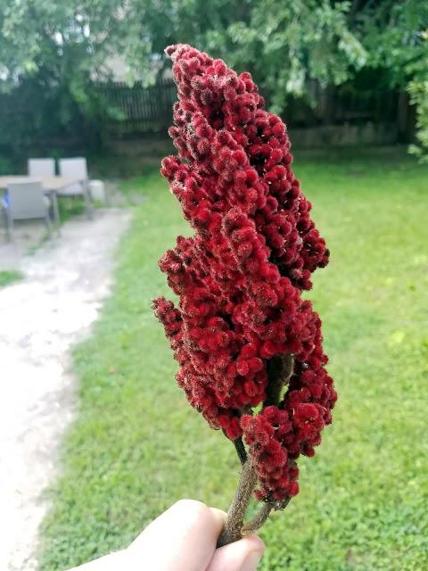 """Staghorn Sumac """"Berries"""""""